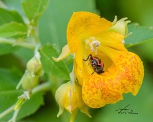 13-Lady Bug